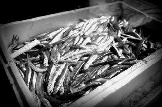 anchovies (boxhagener platz, berlin)