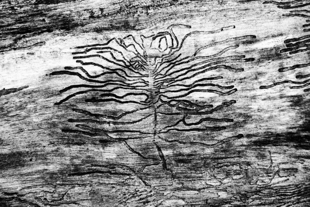 selfportrait of a bark beetle