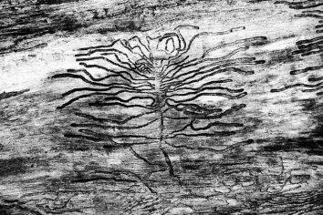 selfportrait of a bark beetle
