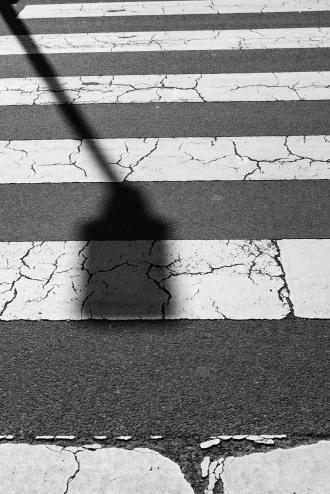 shadow on a zebra