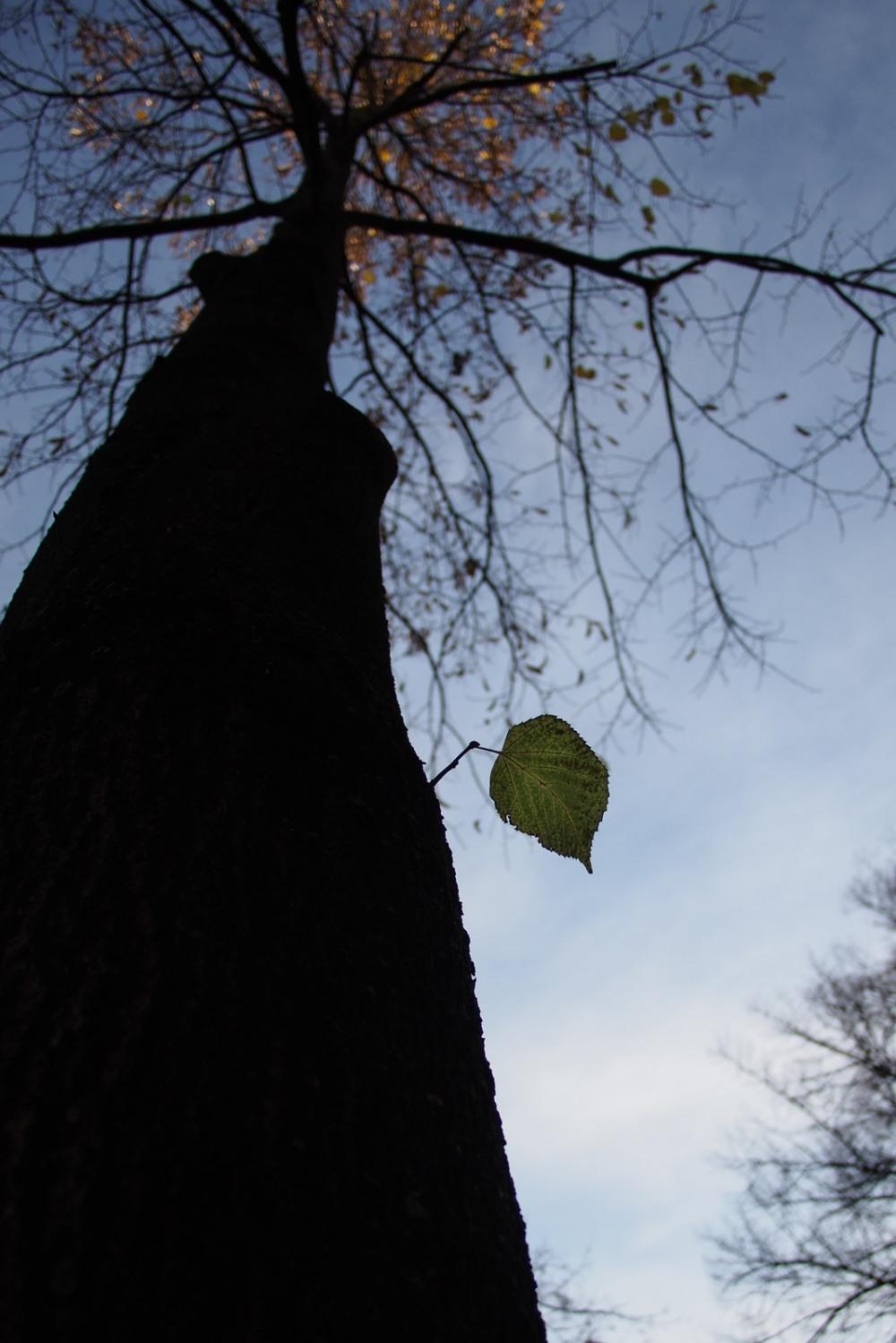 a leaf falls (not)