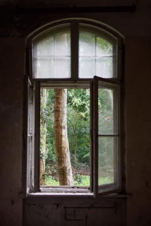 window tree