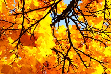 autumnal lung