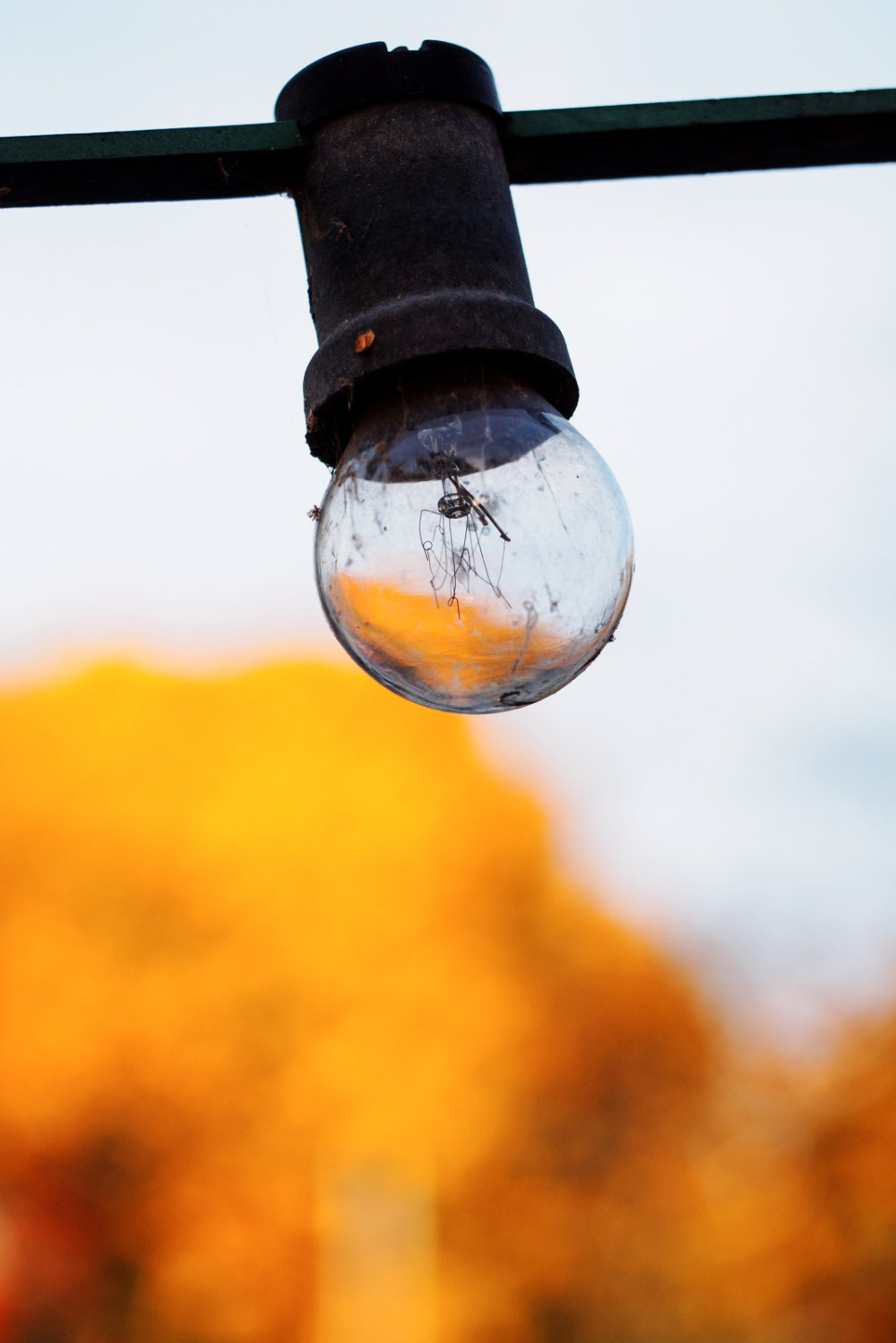 autumn in a bulb