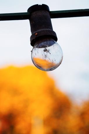 autumn in a bulb